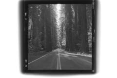 20120410130226_redwoods