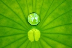 20100601181750_20051223061958_leaf